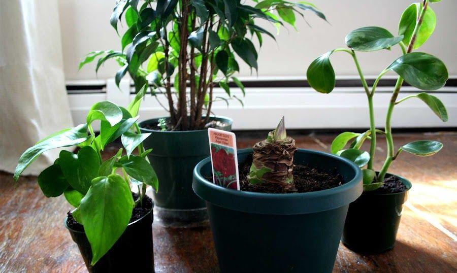 Las 7 plantas de interior m s bellas y f ciles de cuidar - Las mejores plantas de interior ...