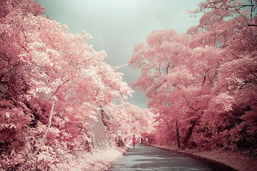 Pin By Tina Socarras On My Happy Place Pink Trees Nature Photo
