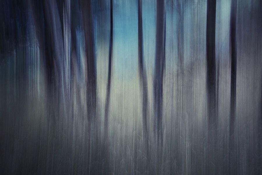Photo Evening Woods by Ursula Abresch on 500px