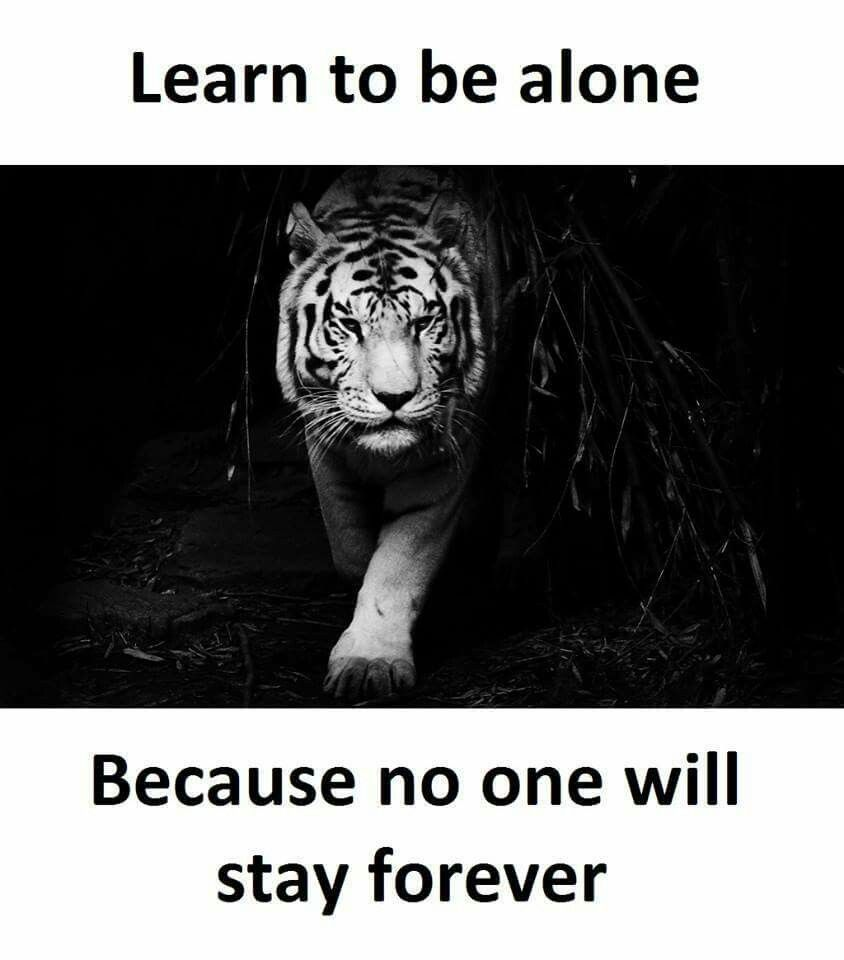 Quotes Image By Carlotta Chamley Tiger Images White Bengal