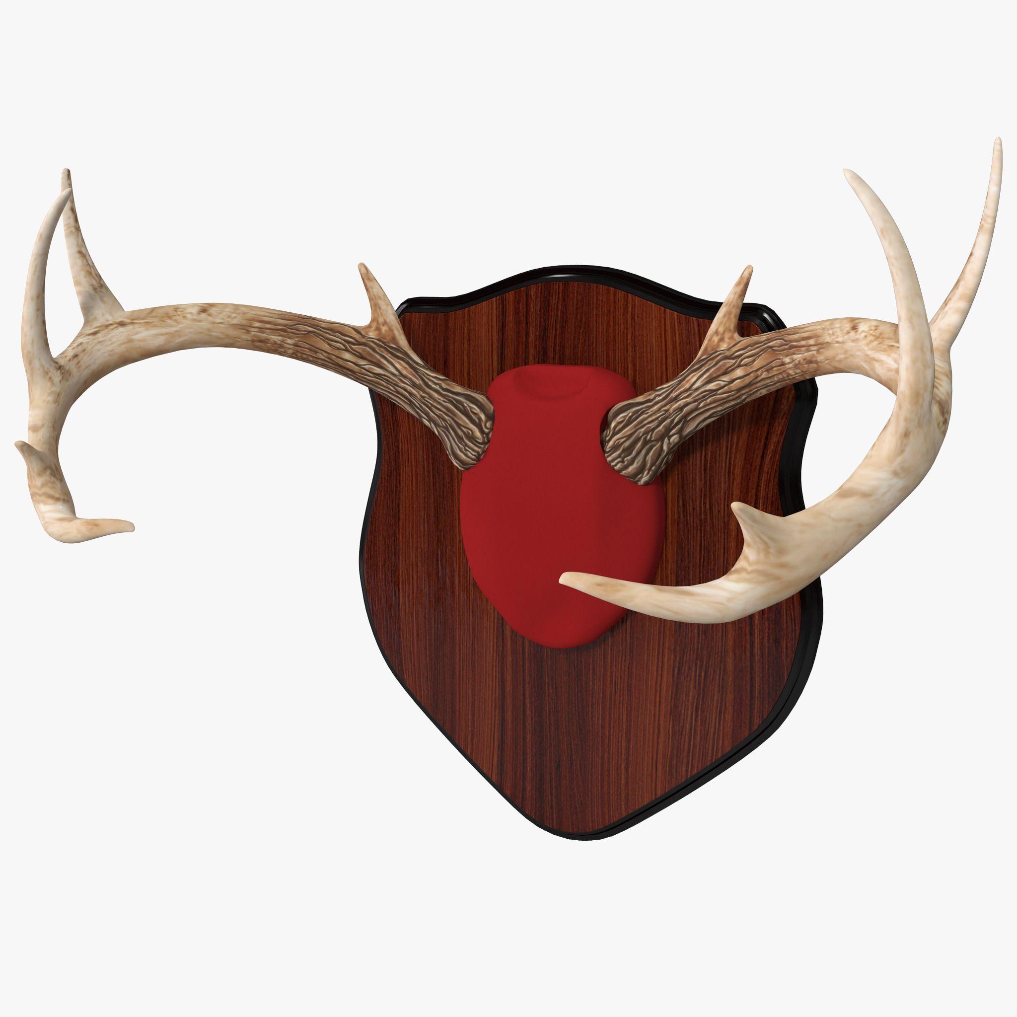 Mounted Deer Antlers 3D Model 3D Model 3D Modeling
