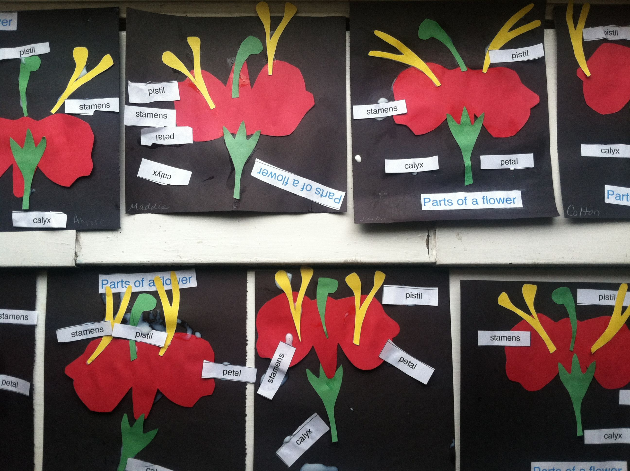 Parts Of A Flower With Labels 3 6 Classroom