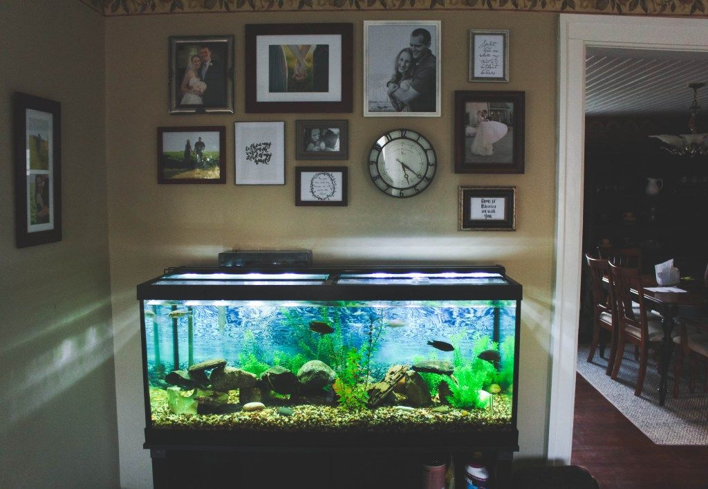 A Peek Inside Our Place Fish Tank Amp Gallery Wall Fish