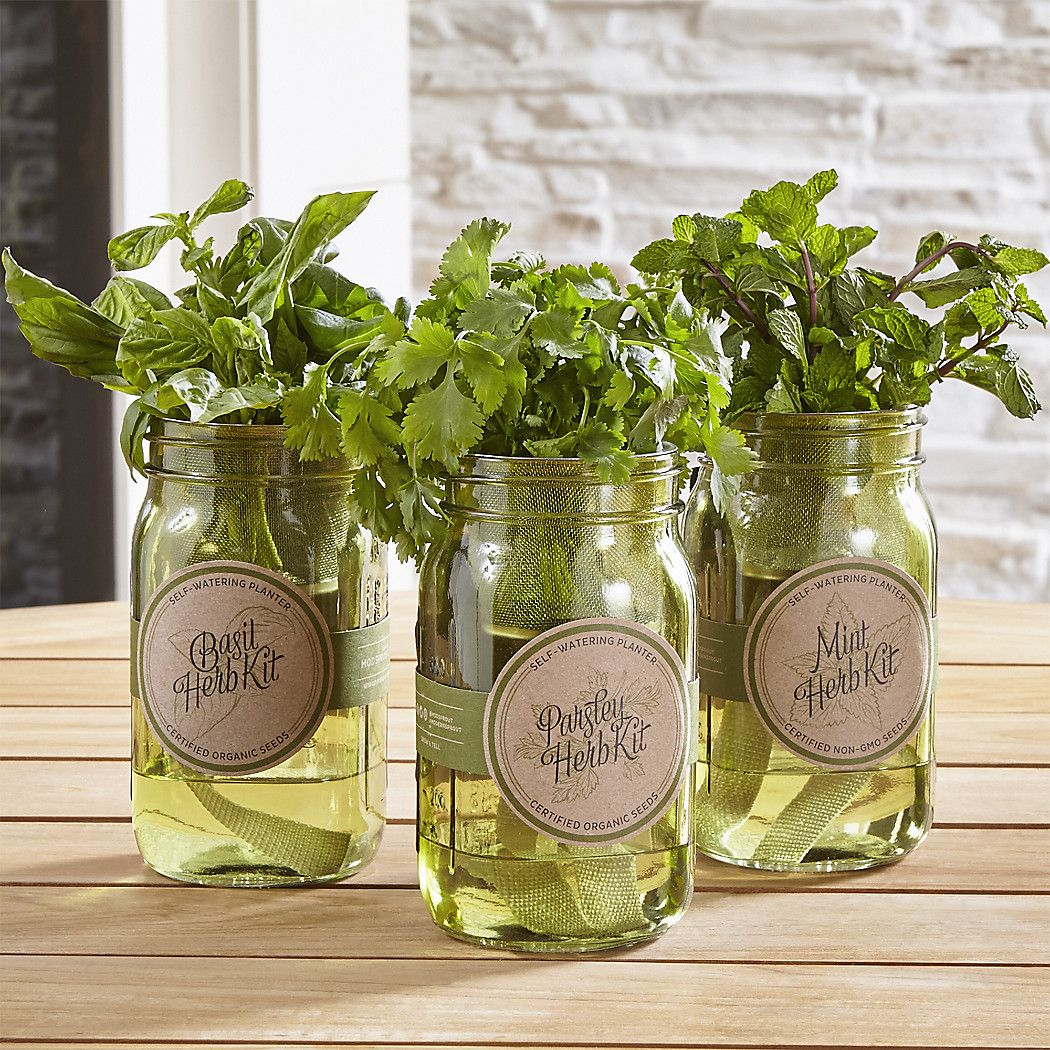 Garden Jar Hydroponic Herb Kit Grow Basil Parsley And Mint On A Sunny Windowsill With This Ingenious Self Watering