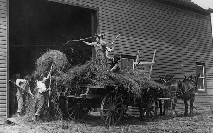 Estudiantes universitarias trabajan en una granja reemplazando a hombres llamados para la Primera Guerra Mundial, Estados Unidos, Mayo de 1918...