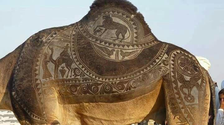 Hindistan da modelli deve traşı