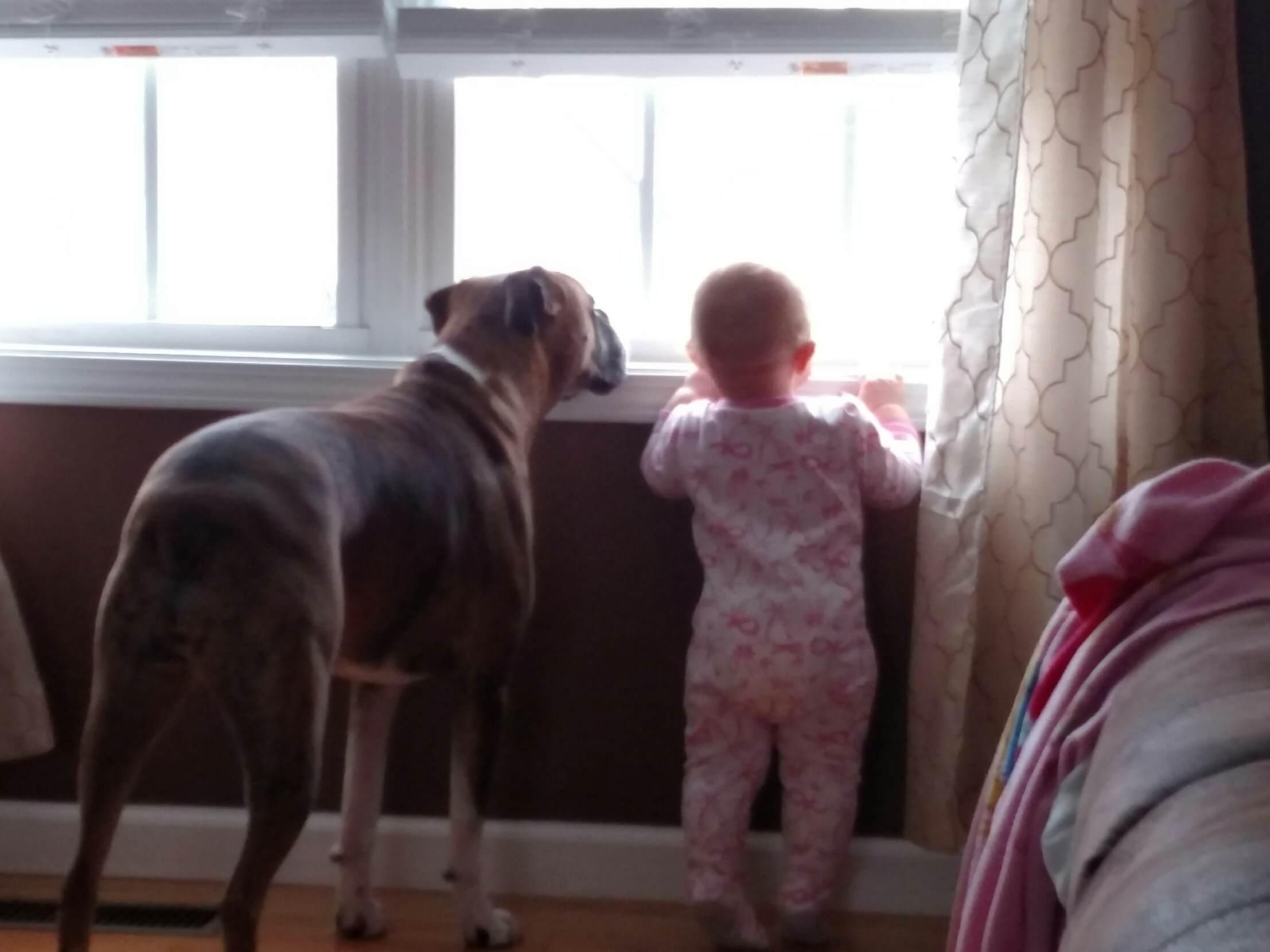 Belle teaching Marilyn how to watch for mommy to come home.