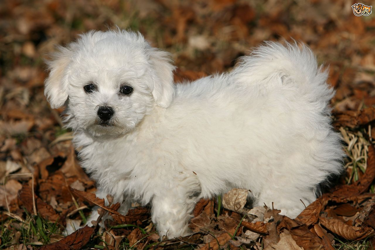 Pin By Dog Lovers On New Puppies Dog Breeds Dog Photos Small Dog Breeds