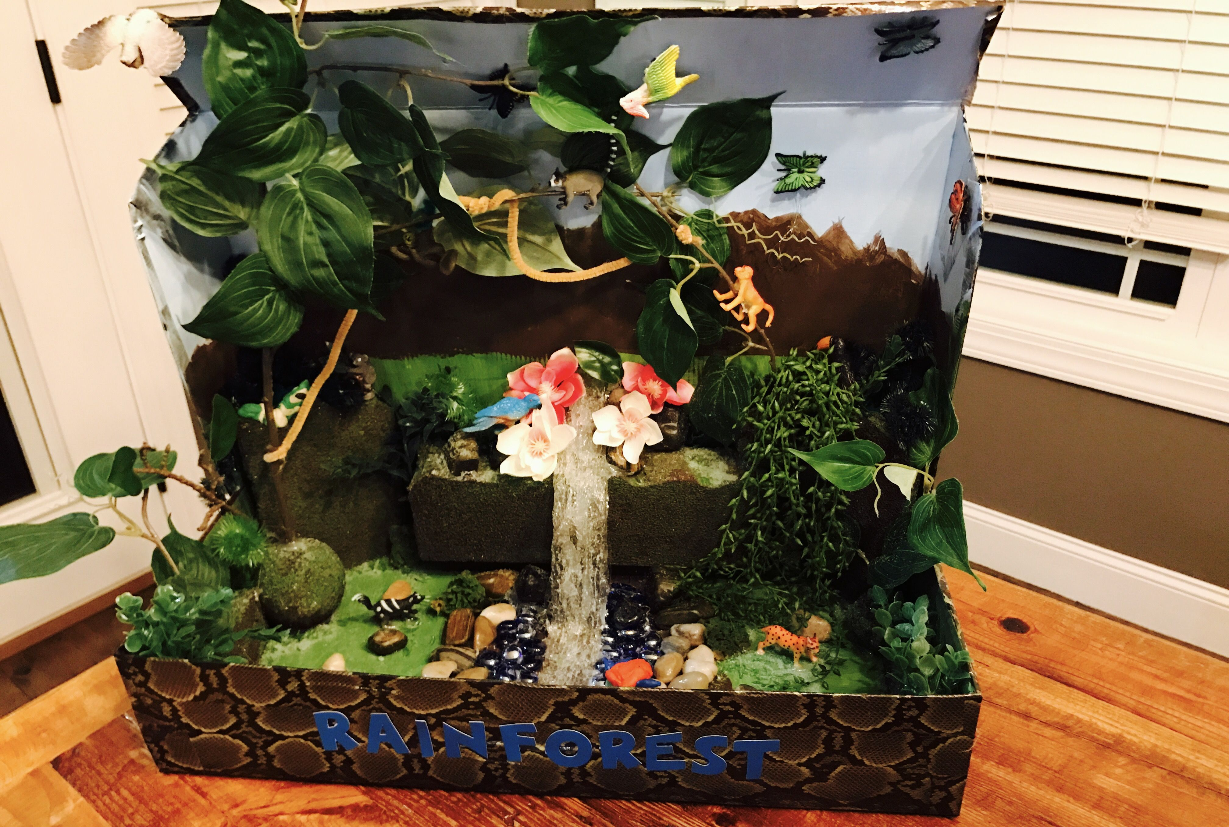 Tropical Rainforest Diorama | school ideas | Rainforest