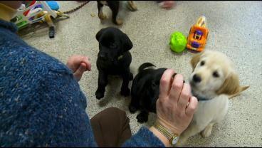 Dozens Respond To 'Can Do Canines' Call For Help « CBS Minnesota