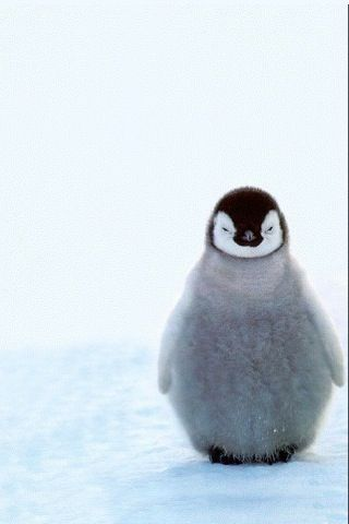 So Cute But Whenever I See This I Think Of March Of The Penguins Cute Animal Photos Cute Animals Cute Baby Animals