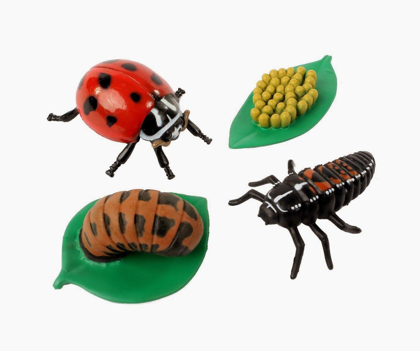 Ladybug Science With Kids