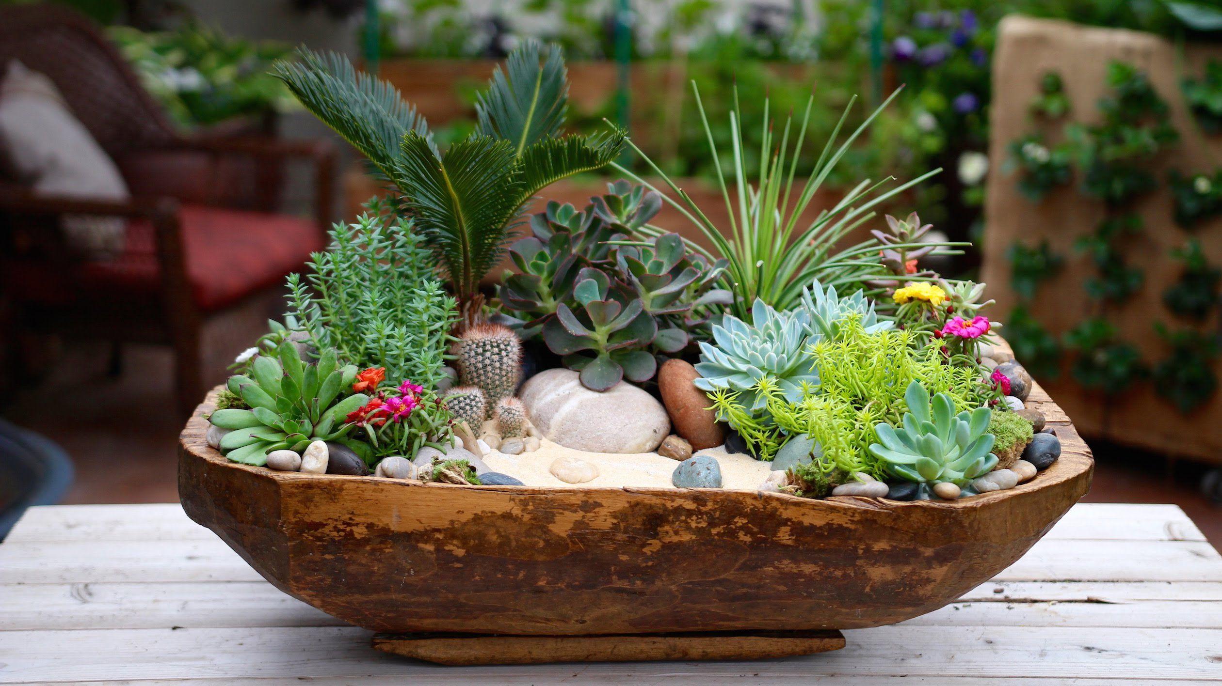 Minyatür Bahçe Yapımı Nasıl Yapılır Bitki Bahçe Bitkileri