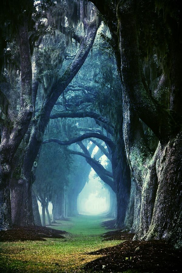 Reminds me of Alice in wonderland | Nature iphone ...