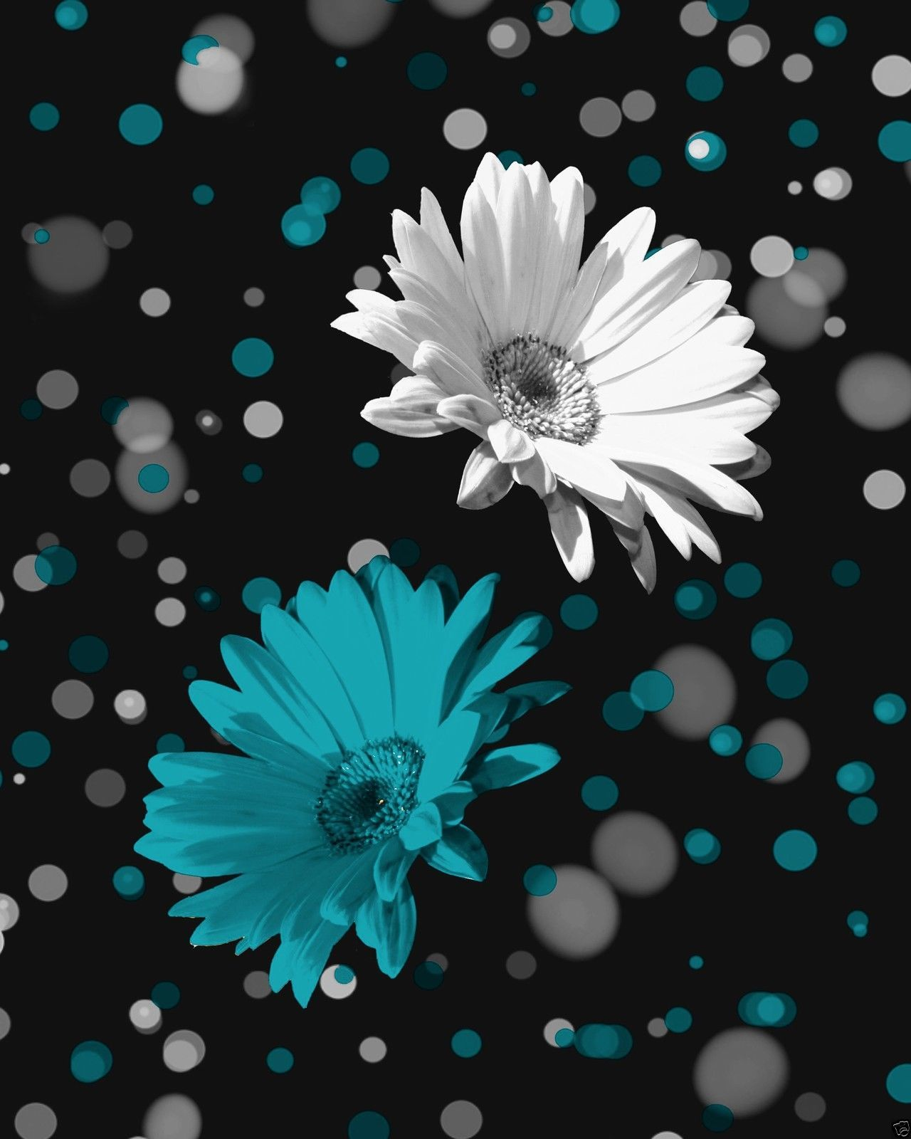 Black White Teal Daisy Flowers Wall Art Home Decor Matted Picture