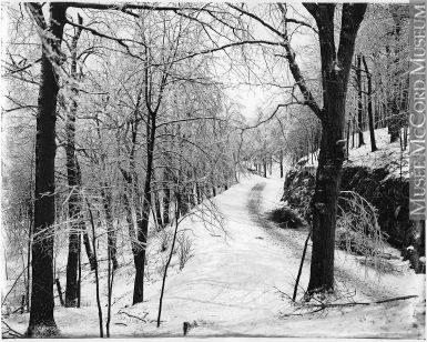 VIEW-6438 | Winter in Mount Royal Park, Montreal, QC, about 1920 ...