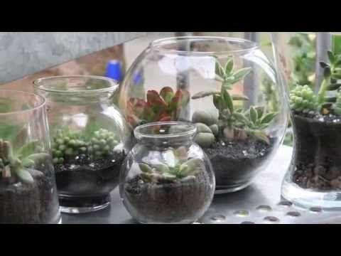 Singapore Limsan S Moss Terrarium Journey モステラリウム 旅