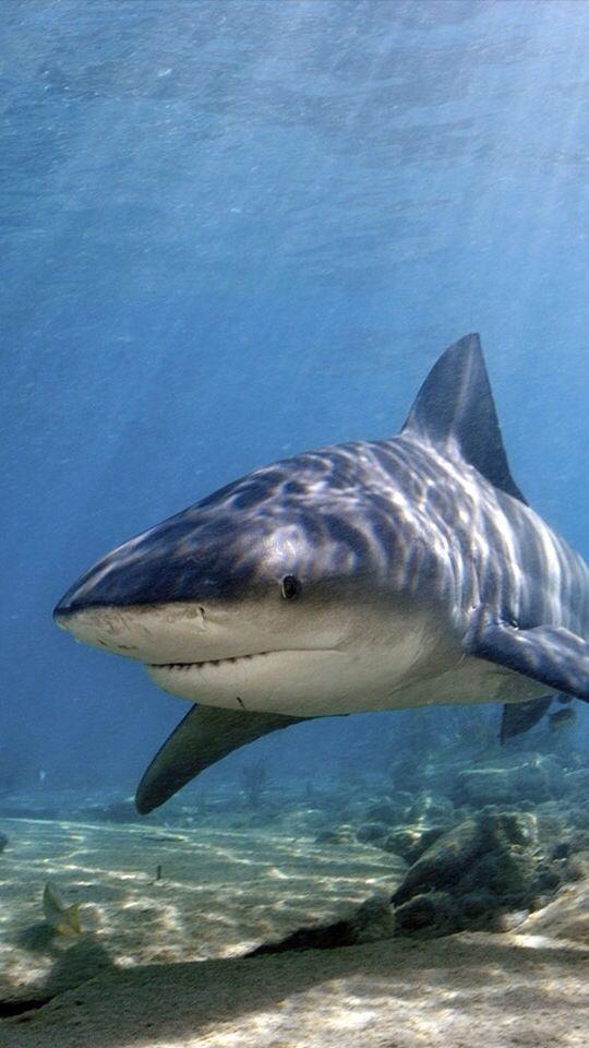 Sharks are so misunderstood