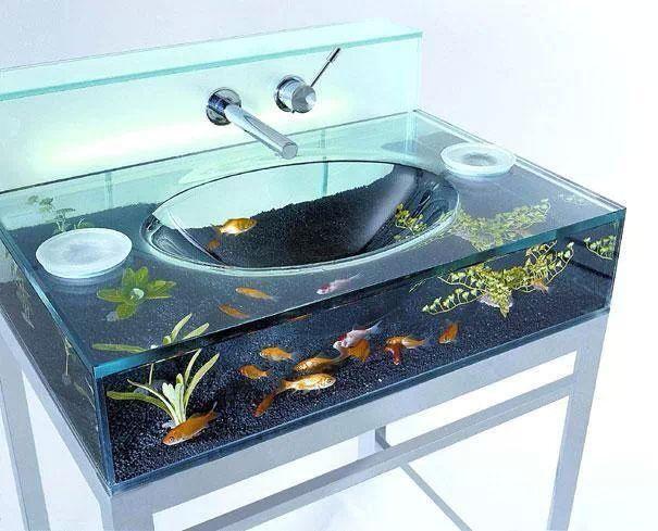 Fishs in basin