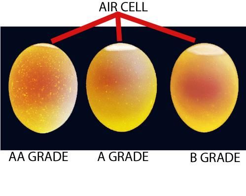 Egg Producers Department Of Agriculture Inspection And Consumer Services Poultry Science Livestock Judging Animal Science