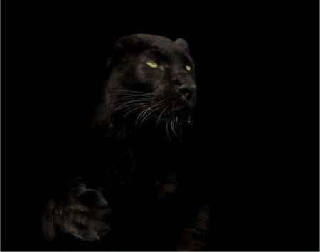 Green Eyed Panther Panther Black Panther Hd Wallpaper Black Panther Black jaguar eyes wallpaper