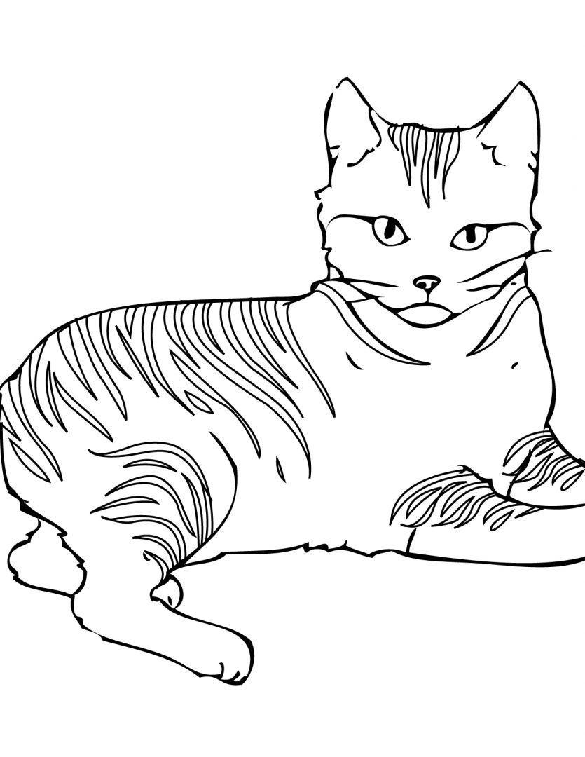 Gato con rayas para colorear | Animales | Pinterest | Rayas ...