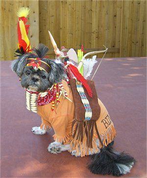 Shih Tzu Pics Shih Tzu Pixs 2 Dog Halloween Costumes Dog Breeds Pictures Shih Tzu