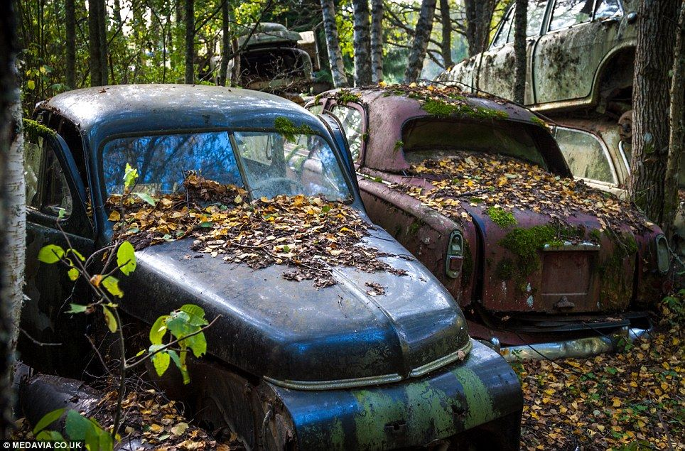 1,000 automobiles from a bygone era found rusting in a forest | Cars ...