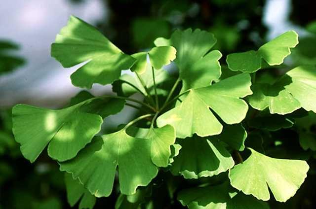 Lo más de lo más del mundo vegetal Medicina alternativa y Árboles