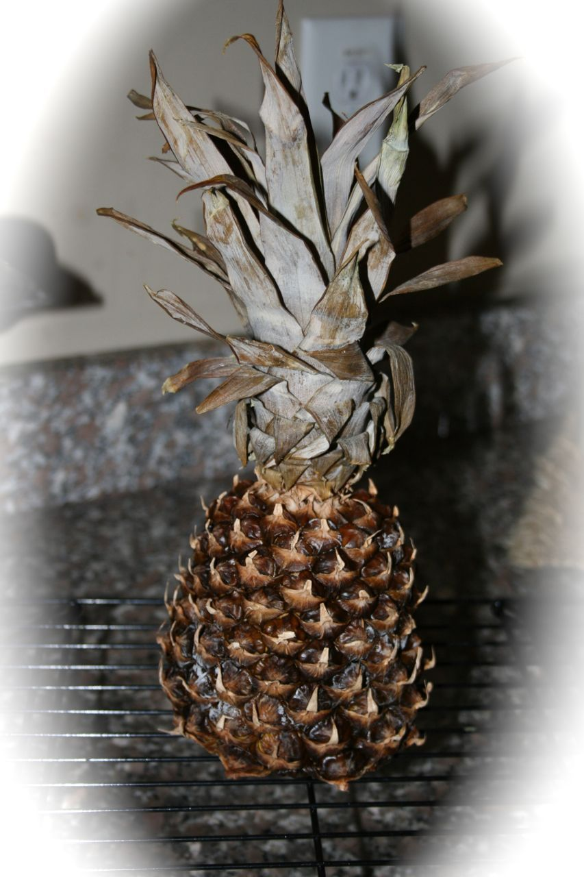 Pineapples were a symbol of welcome hospitality in colonial pineapples were a symbol of welcome hospitality in colonial times here is a drying biocorpaavc Gallery