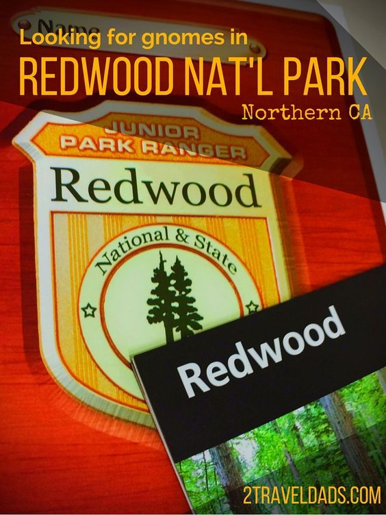 Redwood National Park is a great family travel destination for getting into nature and learning about the giant coastal forest. #FindYourPark 2traveldads.com