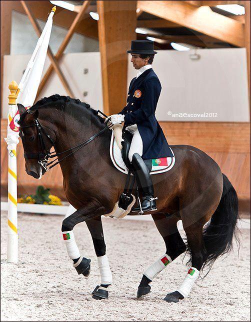 The Perfect Piaffe Just Look At Those Hunches Wow Pferd Und Reiter Schone Pferde Pferde