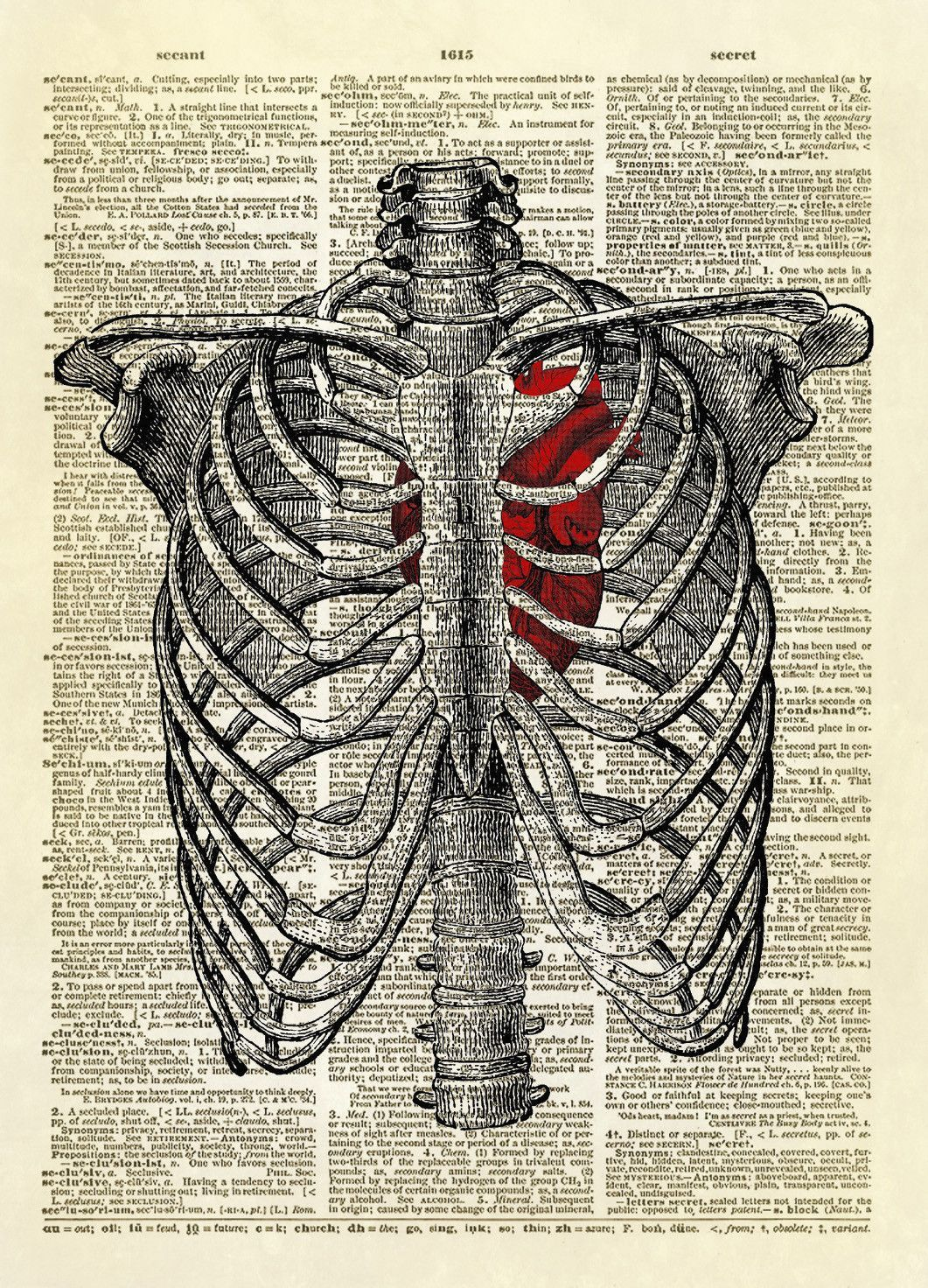 Human Rib Cage with Heart Dictionary Art Print | Caught My Eye ...