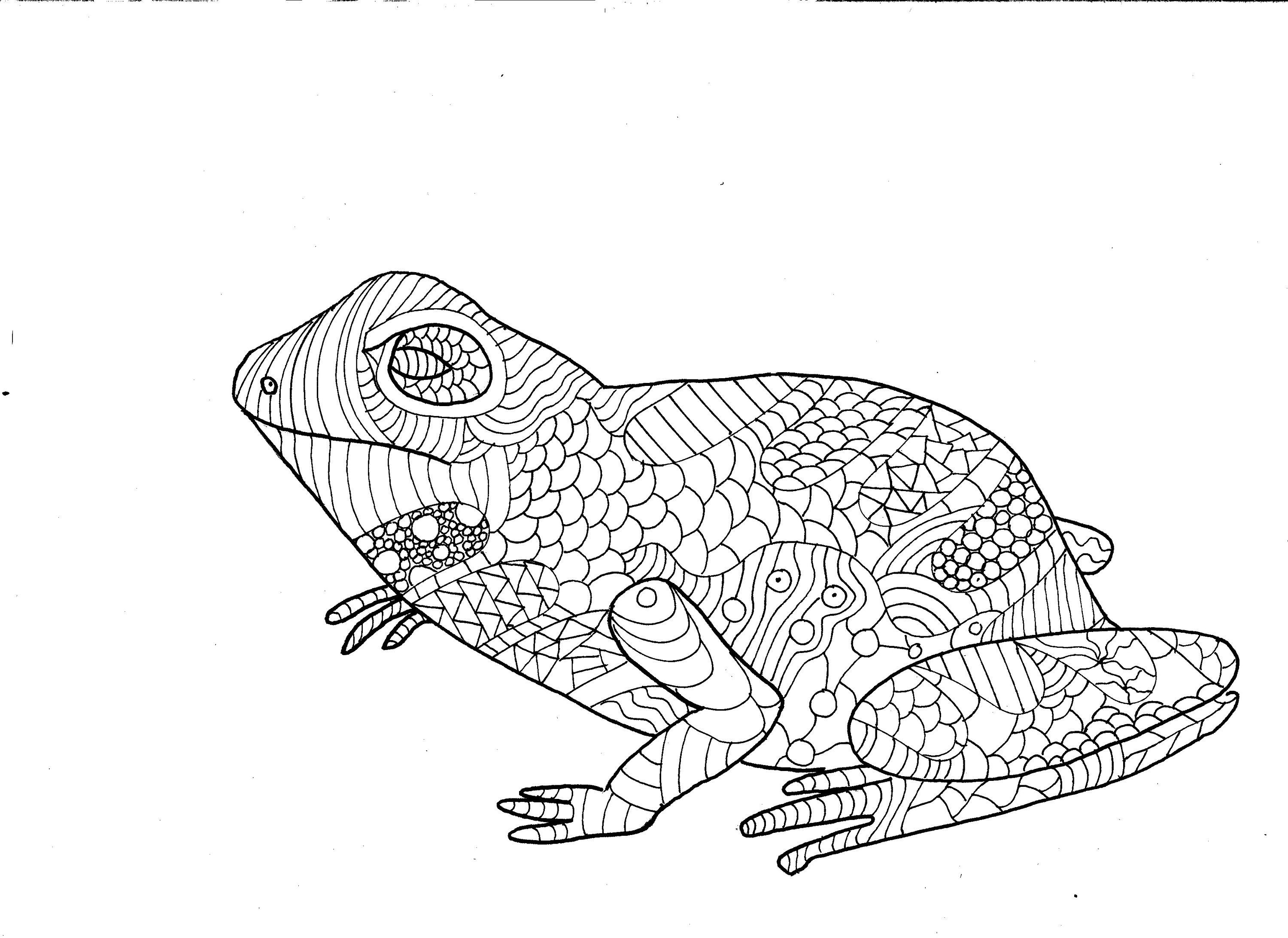 Frog Colouring Page Sitting Frog Adult Colouring Digital