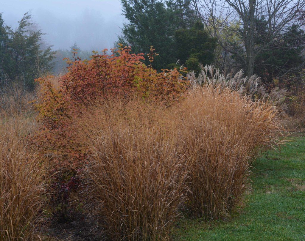 Beautiful grasses in John\'s MARKOWSKI\'S New Jersey Garden | Fine ...