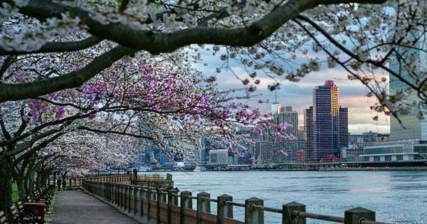 Piclogy: Memories of blossom NYC | Photography by Itoodmuk https://t.co/QjQYipgq0w https://t.co/goAPrWXKqy #OurCam #Photography #OurCam #Photography