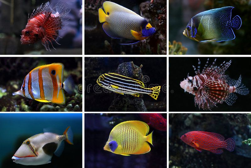 Collection Of Tropical Fishes Collage Of Underwater Images Collection Of Tropi Ad Fishes Tropical Collec Underwater Images Hair Beauty Tropical Fish