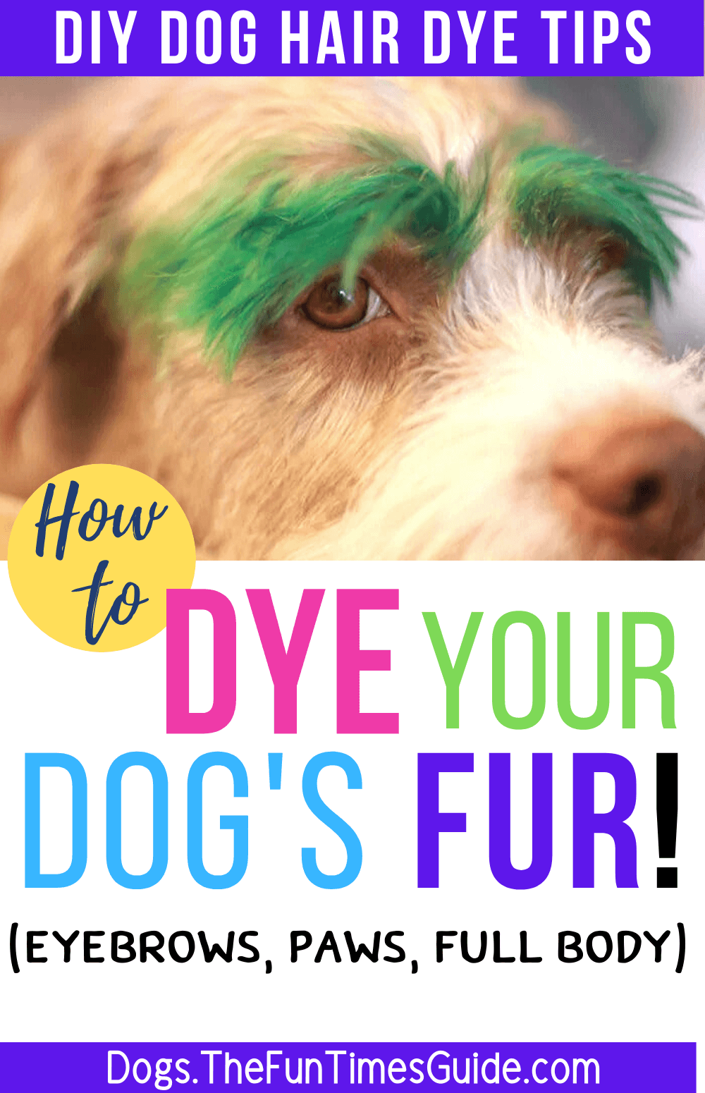 Dye Dog With Food Coloring