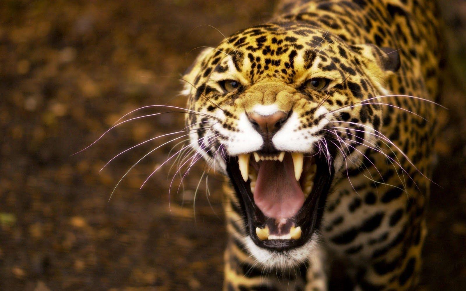 470+ Gambar Hewan-hewan Buas HD Terbaik