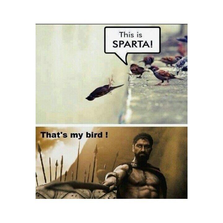 Sparta's bird
