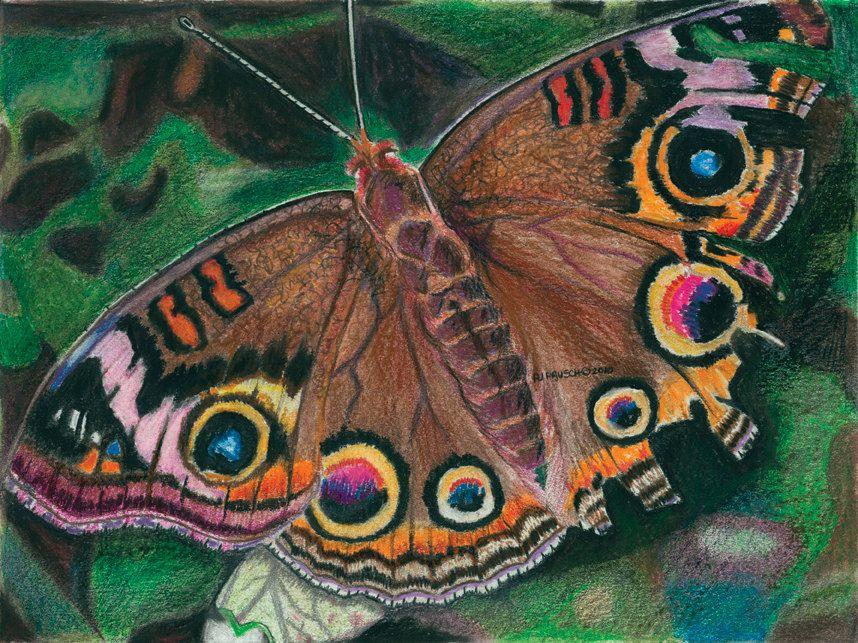 Original Art Print, Color Pencil Drawings, Animal Drawing, Butterfly ...
