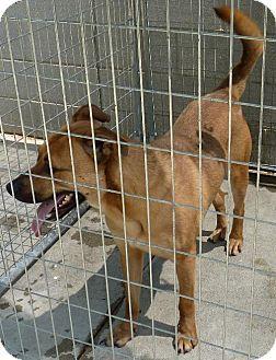 Zanesville Oh Golden Retriever Rottweiler Mix Meet 39214