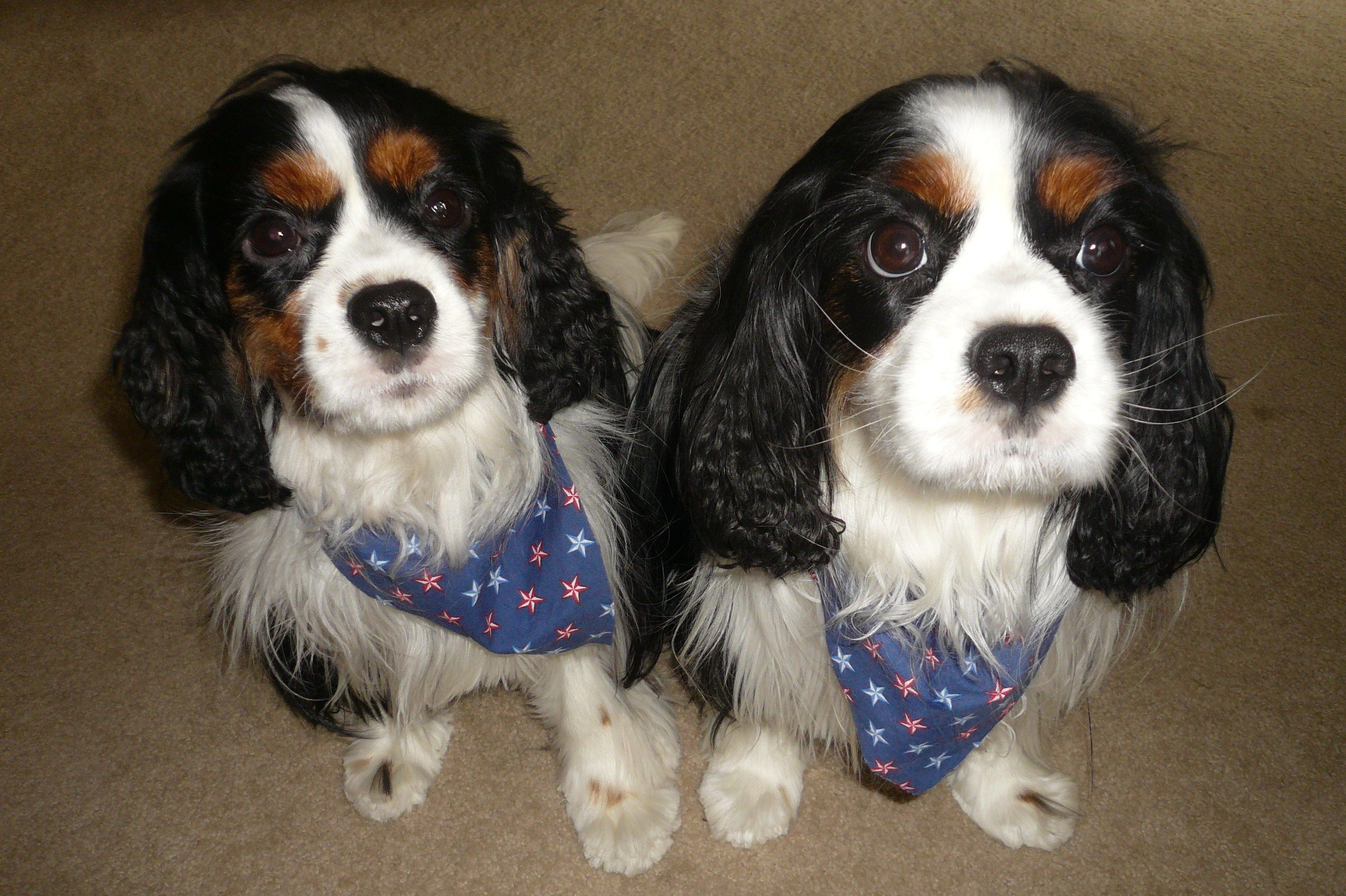 July 4th Haircuts For The Boys My Cavs Pinterest Charles