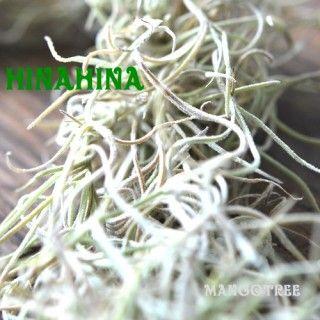 スパニッシュモス 植物