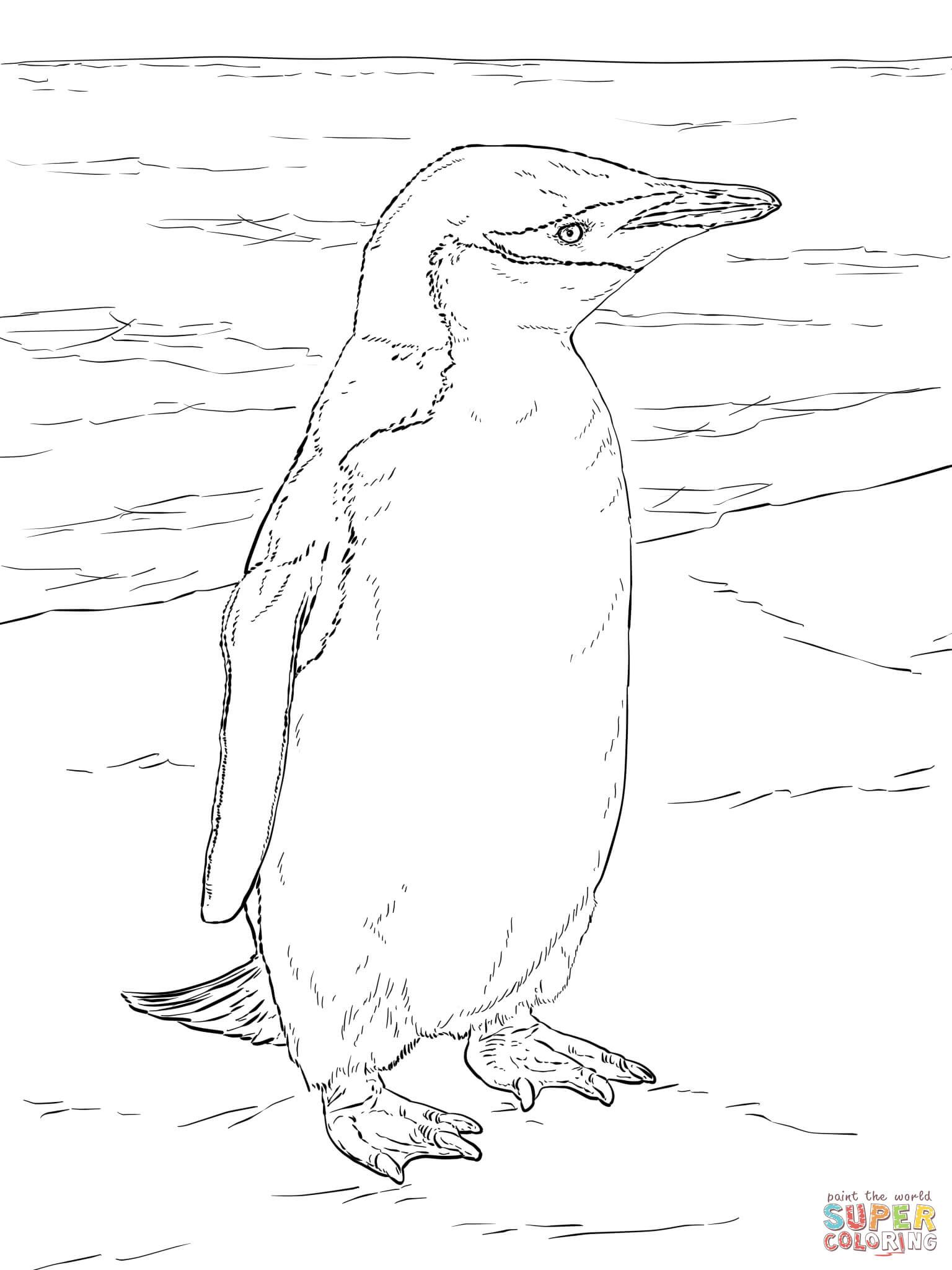 Realistic Chinstrap Penguin | Super Coloring | coloring pages ...