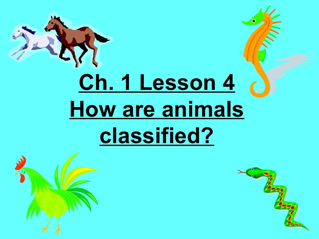 4th Grade Ch 1 Lesson 4 How Are Animals Classified By Ryan