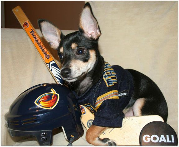 Halloween Photo Contest Beckett The Hockey Player Funny Dog Names Dog Names Funny Dogs