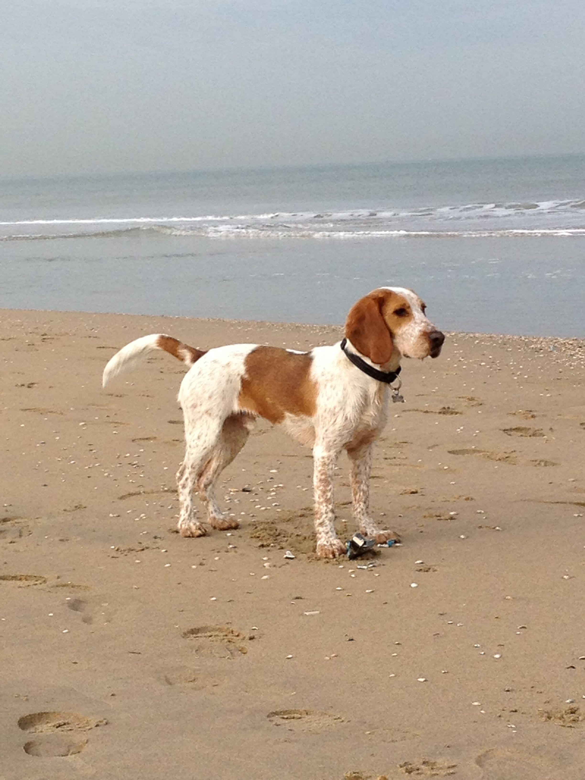 Heart Felt Companion Lil Maltese Puppies For Sale Leicester