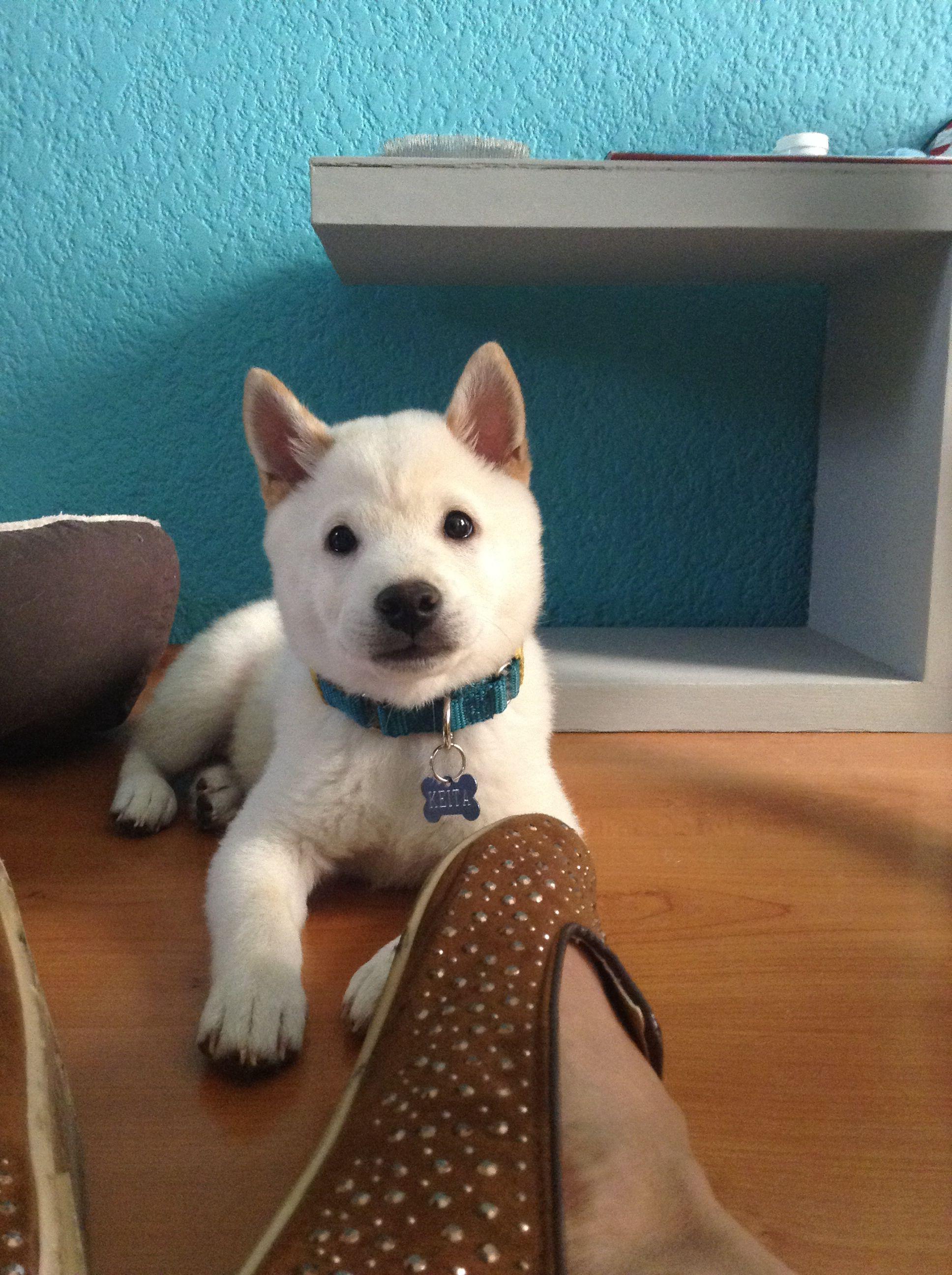 Keita, mi amor. Puppy