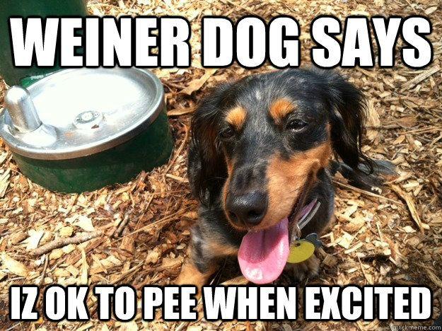 Funny Weiner Dog Pictures Weiner Dog Says Iz Ok To Pee When